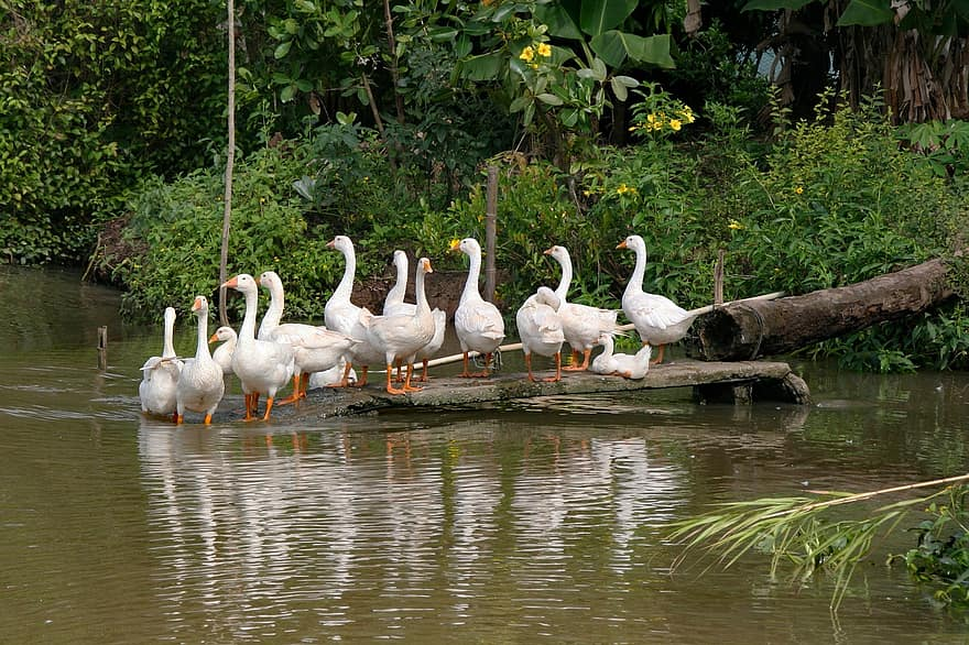 Photo of white geese on shore
