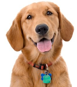 Picture of dog wearing a tag